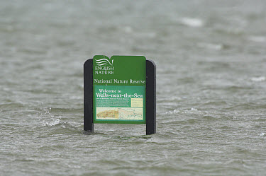 Coastal marsh flooded by sea, English Nature sign underwater, high tide, Wells, North Norfolk, England, august  -  Gary K Smith/ FLPA