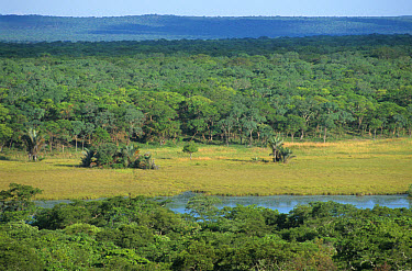 Pristine miombo woodland, natural clearing with river, Lake Wakawaka, Zambia  -  Chris & Tilde Stuart/ FLPA