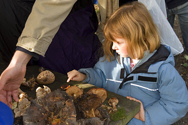 Young girl looking at a collection of fungi  -  David Hosking/ FLPA