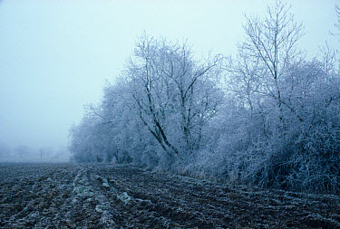 Hedgerow, farm hedgerow covered in frost, beside ploughed field, England, winter  -  Ray Bird/ FLPA