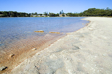 Drought, drying lake with salt deposits on shore, Lake Gardner, Rottnest Island, Western Australia, february  -  Krystyna Szulecka/ FLPA