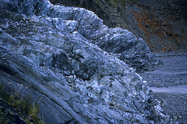 Glacier terminus, Fox Glacier, Westland National Park, South Island, New Zealand  -  Phil Ward/ FLPA