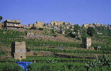 Rural settlement with Khat (Catha edulis) plantations, Western Yemen  -  Chris & Tilde Stuart/ FLPA