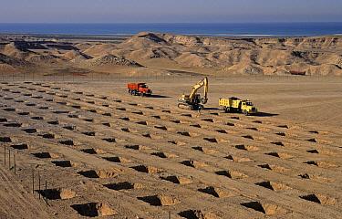 Digger excavating holes for tree planting, Sir Bani Yas Island, Gulf of Arabia, Abu Dhabi, United Arab Emirates  -  Chris & Tilde Stuart/ FLPA