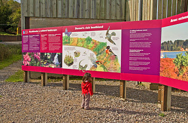 Child looking at large billboard, promoting heathland environment, Arne, Dorset, England  -  Nicholas and Sherry Lu Aldridge/