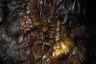 Caves White Scar Caves, Ingleton, Yorkshire, Flowstone & Stalagtite  -  Catherine Mullen/ FLPA