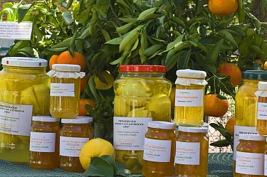 Stand with preserved lemons, orange and citron and grapefruit marmalade, under orange tree, Perth Royal Show, Western Australia  -  Krystyna Szulecka/ FLPA
