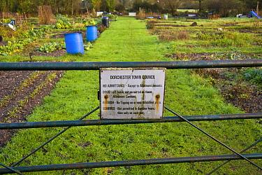 Metal gate with allotment rules signplate, Dorchester, Dorset, England, december  -  Nicholas and Sherry Lu Aldridge/