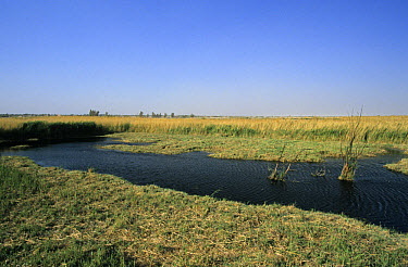View of main wetland pond, spring-fed marsh, Azraq Wetlands Reserve (al Qasiyah), Azraq Oasis, Jordan  -  David Hosking/ FLPA