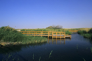 Viewing platform and boardwalk, spring-fed marsh, Azraq Wetlands Reserve (al Qasiyah), Azraq Oasis, Jordan  -  David Hosking/ FLPA