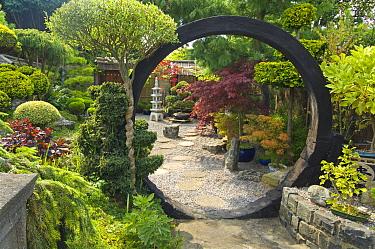 Japanese style garden design with arch, Willerby, East Yorkshire, England, august  -  Krystyna Szulecka/ FLPA
