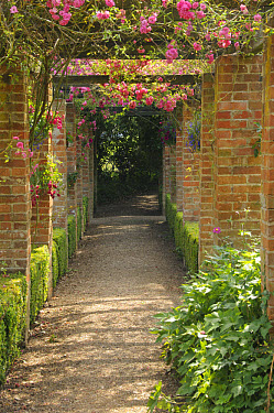 Large brick pergola with roses in country house garden, England, july  -  Gary K Smith/ FLPA