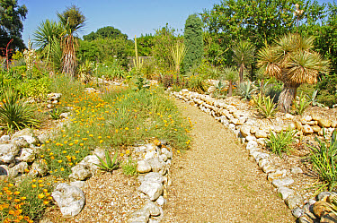 Path through large dry garden, East Ruston, Norfolk, England, july  -  Gary K Smith/ FLPA