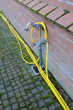 Garden hose tap outlet on house wall, with yellow hosepipe, England  -  Gary K Smith/ FLPA