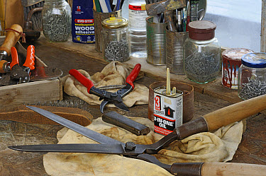 Garden tools, secateurs and shears on workshop bench, ready to be cleaned and sharpened, England, december  -  Gary K Smith/ FLPA