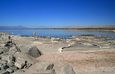 View of saline lake, Salton Sea, Santa Rosa Mountains in distance, Salton Sink, Colorado Desert, California  -  Michael Rose/ FLPA