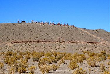 Graveyard placed on remote hilltop near saltlake, in dry puna grassland, Salta, Argentina, january  -  Neil Bowman/ FLPA