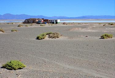 Remote homestead beside saltlake in saltflats habitat, Jujuy, Argentina, january  -  Neil Bowman/ FLPA