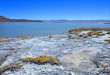 View over saltlake from puna saltflats habitat, Rincon Saltflat, Salta, Argentina, january  -  Neil Bowman/ FLPA