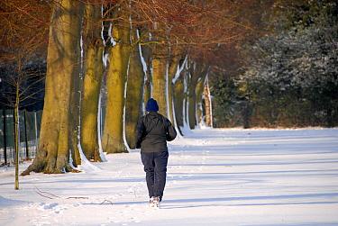 Jogger running around snow covered sports field in sunshine, Hertfordshire, England, winter  -  Nick Spurling/ FLPA