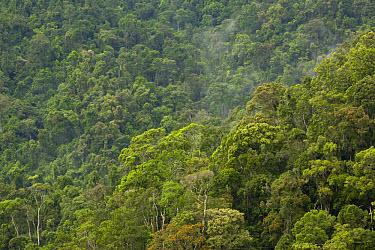 Tropical rainforest canopy habitat, Antsinana Complex, Ranomafana National Park, Fianarantsoa Province, Southeastern Madagascar  -  Chris Mattison/ FLPA