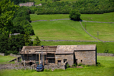 Builder repairing stone roof on barn, Swaledale, Yorkshire Dales National Park, North Yorkshire, England  -  Wayne Hutchinson/ FLPA