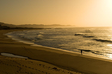 View of jogger on open sandy beach at dawn, Port Alfred, Eastern Cape, South Africa  -  Chris and Tilde Stuart/ FLPA