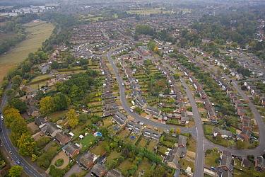 Aerial view of suburban houses and gardens, Norfolk, England, autumn  -  Roger Tidman/ FLPA
