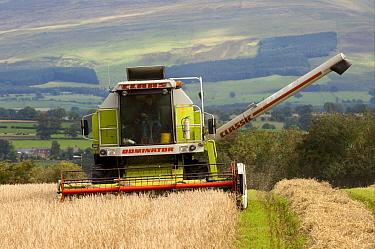 Claas Dominator combine harvester, harvesting spring Barley (Hordeum vulgare) crop, England  -  Wayne Hutchinson/ FLPA