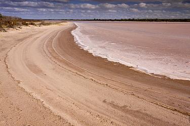 Large temporary saline lake in semi-desert, Mongers Lake, East Perenjori, Western Australia, Australia  -  Bob Gibbons/ FLPA