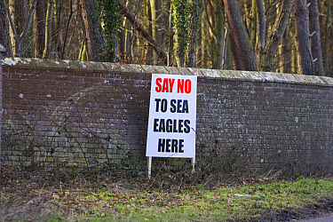 White-tailed Eagle (Haliaeetus albicilla) reintroduction protest, 'Say No to Sea Eagles Here' sign, Norfolk, England, winter  -  Roger Tidman/ FLPA