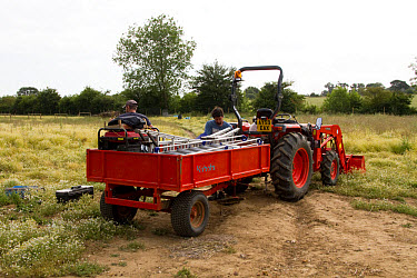Small multi purpose tractor working on a smallholding farm  -  David Hosking/ FLPA