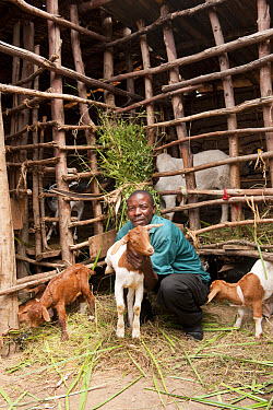 Goat farming, farmer with young Boer goats beside shed, Rwanda  -  Wayne Hutchinson/ FLPA