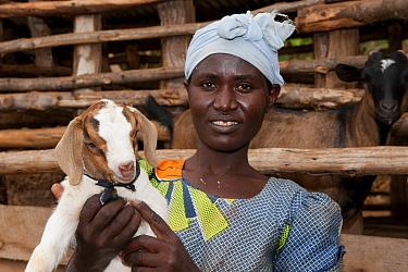 Goat farming, woman holding young Boer goat beside shed, Rwanda  -  Wayne Hutchinson/ FLPA