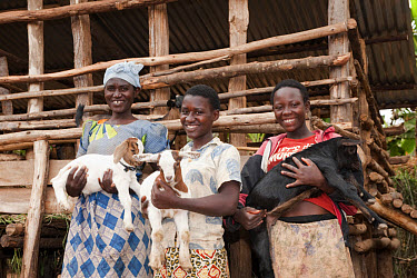 Goat farming, three women holding young Boer goats beside shed, Rwanda  -  Wayne Hutchinson/ FLPA