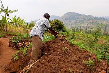 Farmer watering centre of keyhole vegetable garden, used for extra water retention, Rwanda  -  Wayne Hutchinson/ FLPA