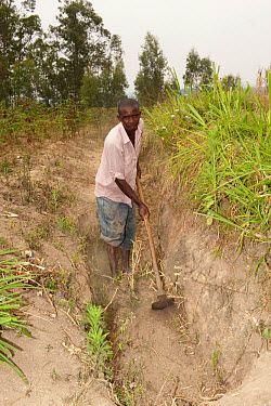 Farmer digging ditch on hillside, to help collect rainfall and prevent rapid soil erosion, Rwanda  -  Wayne Hutchinson/ FLPA