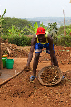 Farmer mixing manure and compost into soil to improve fertility, Rwanda  -  Wayne Hutchinson/ FLPA