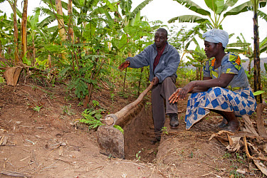 Lady farmer and advisor discussing irrigation ditches in banana grove, to help collect rainfall and prevent rapid soil erosion, Rwanda  -  Wayne Hutchinson/ FLPA