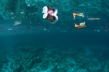 Rubbish drifting at surface of sea, Ambon Island, Maluku Islands, Banda Sea, Indonesia  -  Colin Marshall/ FLPA