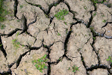 Parched soil with cracks during drought conditions, England, july  -  Wayne Hutchinson/ FLPA