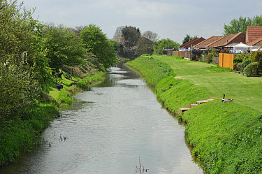 View of drainage ditch and banks, Willoughby Drain, Chapel St. Leonards, Lincolnshire, England, april  -  John Eveson/ FLPA