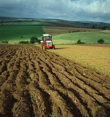 Old tractor ploughing downland pasture after weedkiller application for renovation  -  Nigel Cattlin/ FLPA
