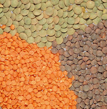 Green, Brown and small red lentil seeds in piles, still life  -  Nigel Cattlin/ FLPA