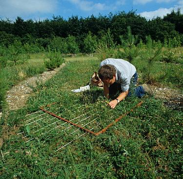 Research technician assessing weed population in a metre quadrat  -  Nigel Cattlin/ FLPA