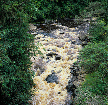 Fast-flowing Andrean mountain river brown with tannin of mountain plants, Colombia  -  Nigel Cattlin/ FLPA