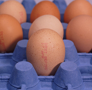 Close up of Eggs in a cardboard tray, clearly showing 'Best Before Date'  -  Nigel Cattlin/ FLPA