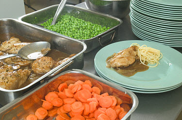 Food prepared for meal in commercial kitchen and ready for serving  -  Nigel Cattlin/ FLPA