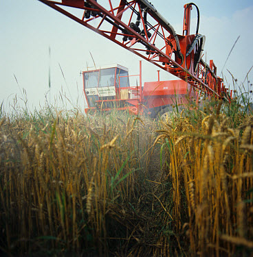 Sam sprayer spraying glyphosate onto wheat crop pre-harvest to control couch grass  -  Nigel Cattlin/ FLPA