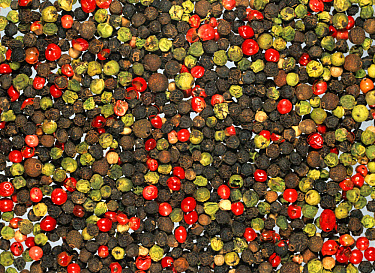 Mixed pepper seeds of various colours, red, black, green  -  Nigel Cattlin/ FLPA